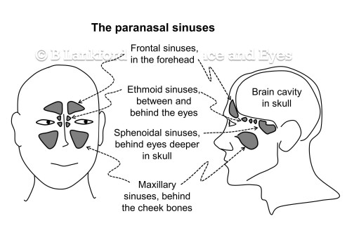 Sinus diagram